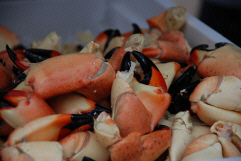 Fresh stone crab claws are available in several sizes - ready to eat