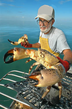 Fresh Florida Stone Crab - a real taste treat!